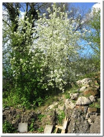Blütenpracht im Wildgarten